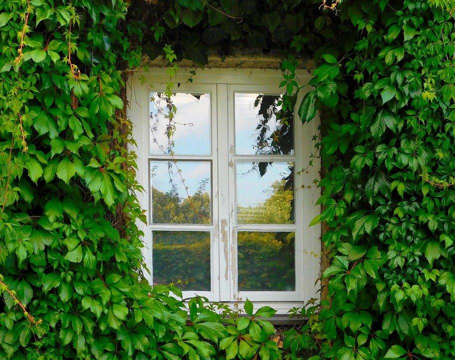 Comment cultiver une façade végétalisée ?