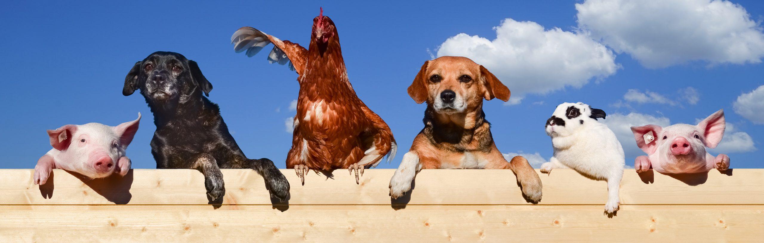 Découvrez l'essentiel sur le monde animal