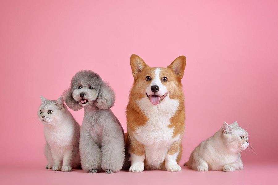 Comment se faire rembourser par l'assurance animaux?
