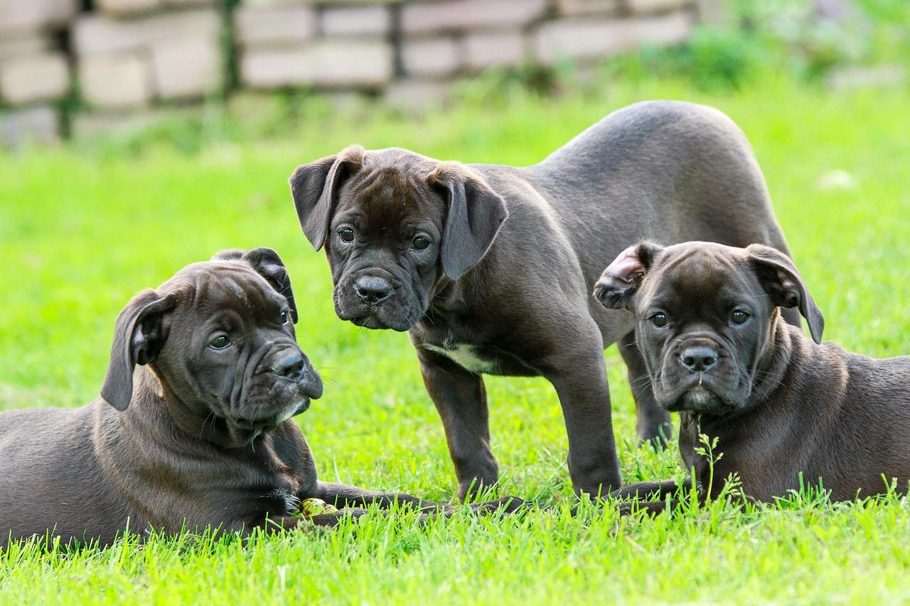 Quelle est l'importance de la vaccination pour chien ?