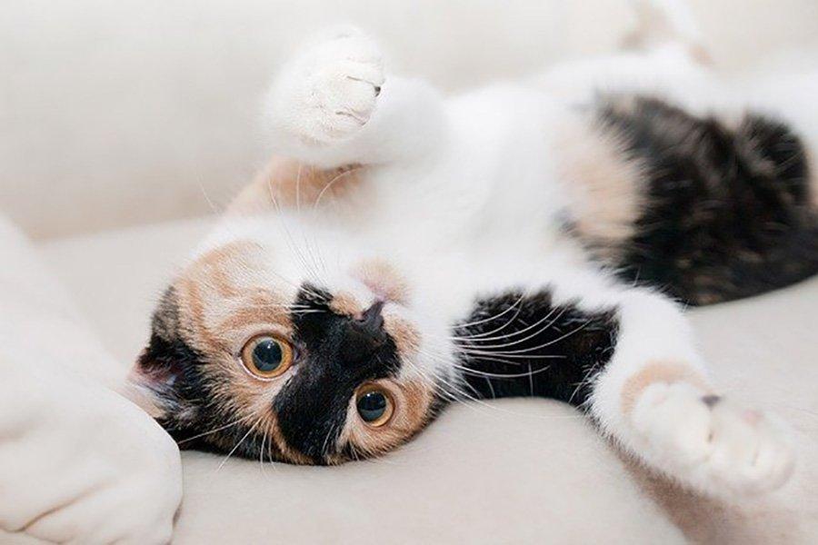 L'arbre à chat : l'équipement par excellence pour votre animal