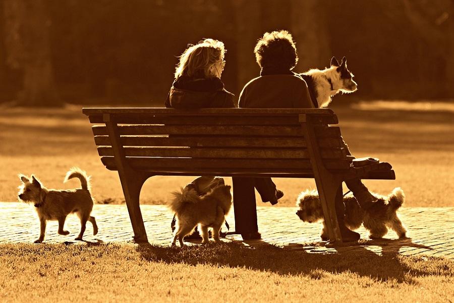L'importance des animaux de compagnie dans nos villes aujourd'hui