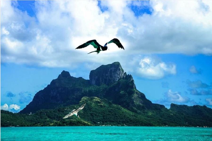 Explorer chaque opportunité pour un séjour paradisiaque inégalable en Polynésie