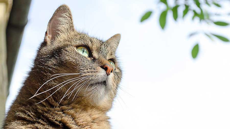 Le comportement du chat : Ses traits de caractère principaux